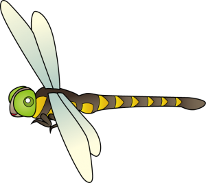 dragonfly_a10